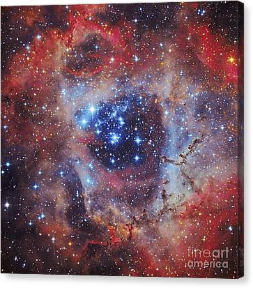 The Rosette Nebula Canvas Print by Roberto Colombari