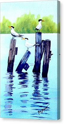 The Royal Terns Canvas Print by Ruth Bodycott