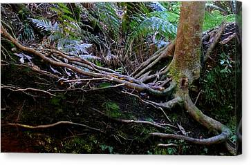 Canvas Print featuring the photograph The Salamander Tree by Evelyn Tambour