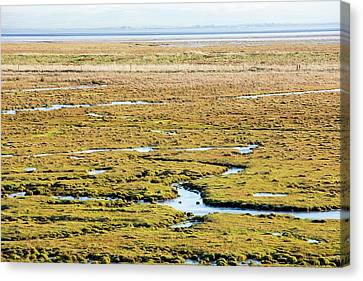 The Salt Marsh Or Merse At Caelaverock Canvas Print by Ashley Cooper