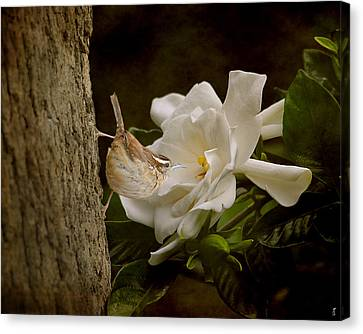 The Scent Of The Gardenia Canvas Print