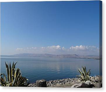 The Sea Of Galilee At Capernaum Canvas Print by Karen Jane Jones