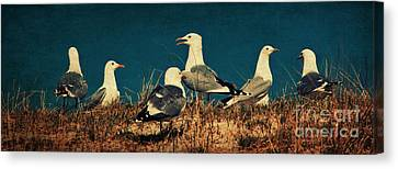 The Seagulls Canvas Print by Angela Doelling AD DESIGN Photo and PhotoArt