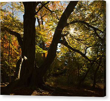 Canvas Print featuring the photograph The Secret Forest by Jose Oquendo