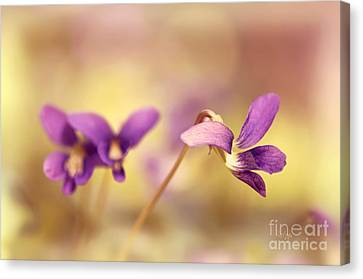 The Secret World Of Wild Violets Canvas Print by Lois Bryan
