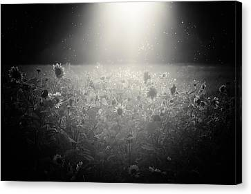 The Select Few Canvas Print by Chris Fletcher