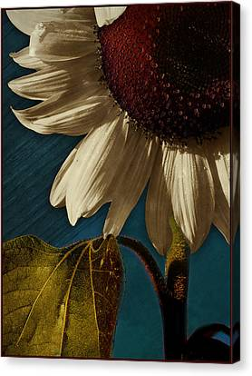 Digital Sunflower Canvas Print - Sunflower by Bernie  Lee