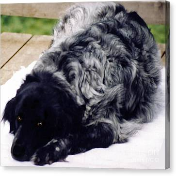 The Shaggy Dog Named Shaddy Canvas Print by Marian Cates