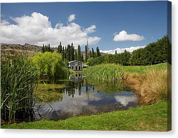 The Shed And Pond, Northburn Vineyard Canvas Print by David Wall