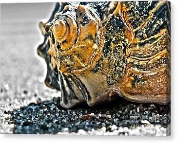 Canvas Print featuring the photograph The Shell On The Sand by Sebastian Mathews Szewczyk