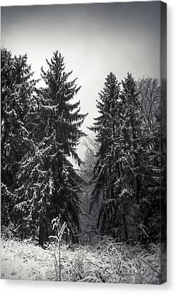 The Silent Season Canvas Print by Shane Holsclaw