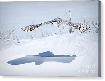The Silent Hunter Canvas Print by Heather King