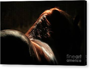 The Silhouette Canvas Print by Angel  Tarantella