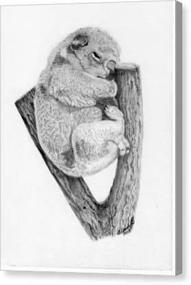 Koala Canvas Print - The Sleeper by Wendy Brunell