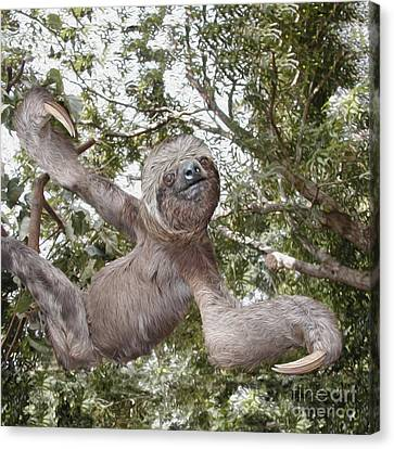 The Sloth  A Real Tree Hugger Canvas Print