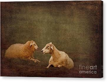 The Smiling Sheeps Canvas Print by Angela Doelling AD DESIGN Photo and PhotoArt