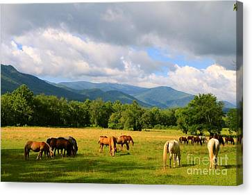 The Smokies Canvas Print by Jay Nodianos