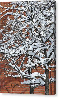 The Snow And The Wall Canvas Print by Frederico Borges