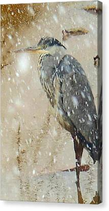 The Snow Bird Canvas Print by Tim Ernst