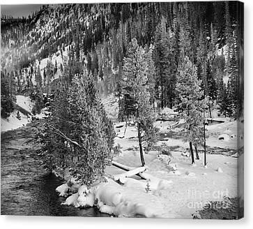 The Snow Tree's Canvas Print