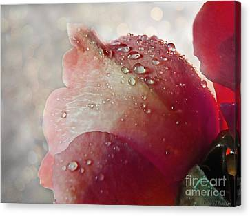 Canvas Print featuring the photograph The Soft Kiss Of Dew II by Debbie Portwood