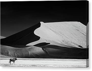 Wild Dunes Canvas Print - The Solitary by Mathilde Guillemot