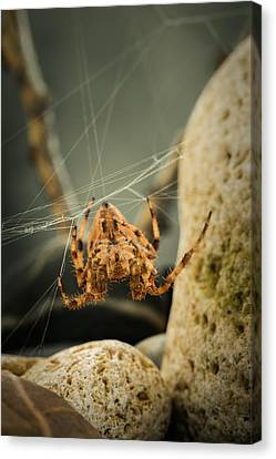 The Spectacular Spider I Canvas Print