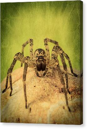 The Spider Series X Canvas Print