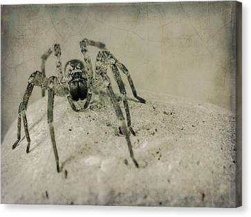 The Spider Series Xi Canvas Print by Marco Oliveira