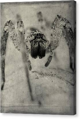 The Spider Series Xii Canvas Print by Marco Oliveira