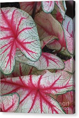 The Splendour Of Leaves Canvas Print by Marlene Robbins