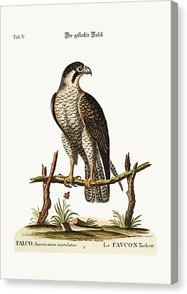 The Spotted Hawk Or Falcon Canvas Print by Splendid Art Prints
