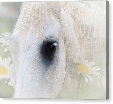 The Spring Gift Giver Canvas Print