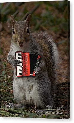 The Squirrel And His Accordion Canvas Print by Sandra Clark