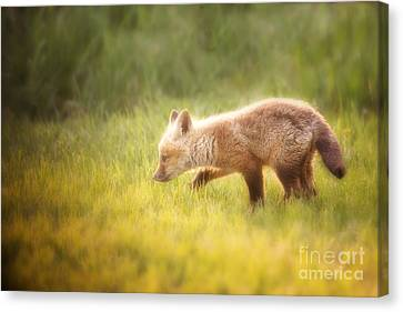 The Stalk Canvas Print by Todd Bielby