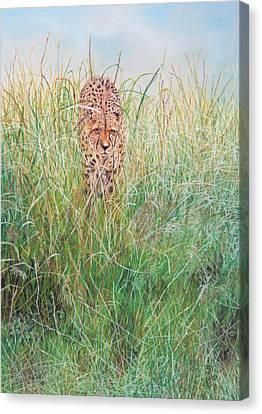 The Stalker Canvas Print by John Hebb