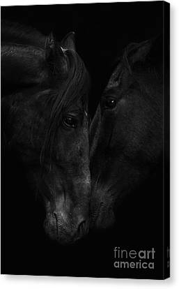 The Stallion And The Mare Canvas Print by Carol Walker