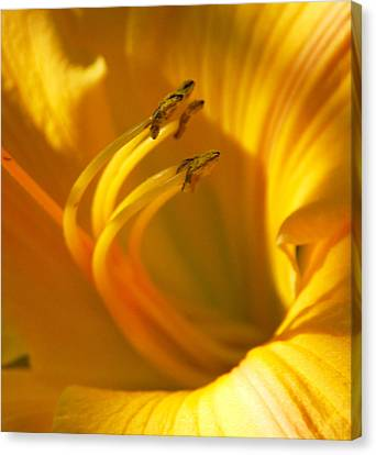 The Stamen Canvas Print