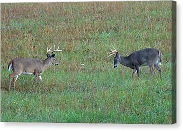 The Standoff In Cades Cove Canvas Print by Dan Sproul