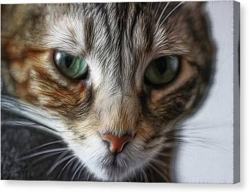 00002 The Stare Canvas Print by Photographic Art by Russel Ray Photos