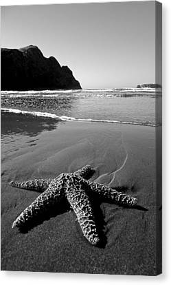 The Starfish Canvas Print by Peter Tellone