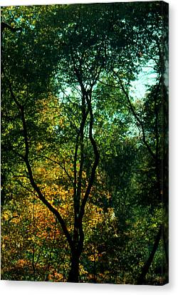 Canvas Print featuring the photograph The Start Of Fall by Ben Kotyuk