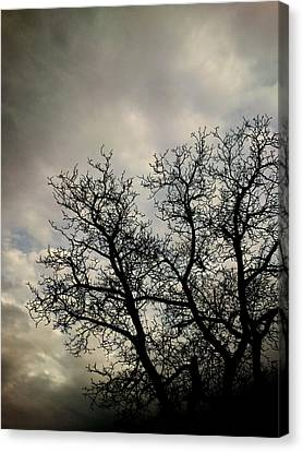 The Storm Canvas Print by Lucy D