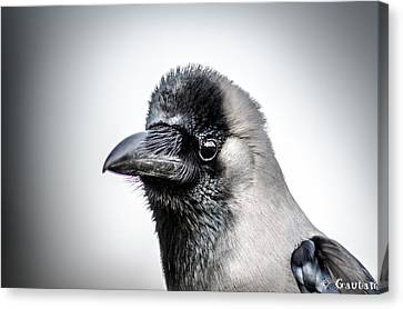 Canvas Print - The Story Of Crow by Gautam Gupta
