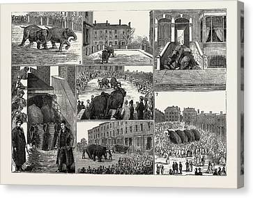 The Strange Adventures Of Two Runaway Elephants In Kentish Canvas Print by English School