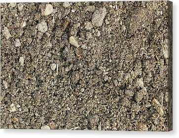 The Structure Of A Garden Soil Canvas Print by Dr Jeremy Burgess