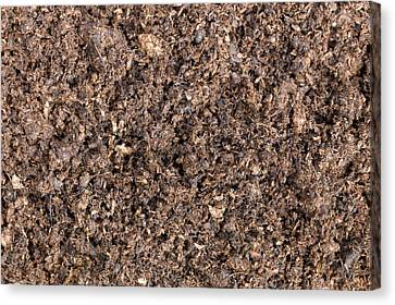 The Structure Of Peat-based Compost Canvas Print by Dr Jeremy Burgess