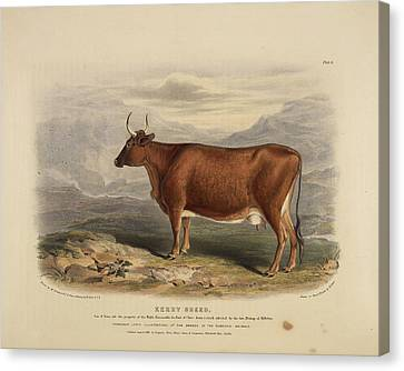 The Suffolk Punch Canvas Print by British Library