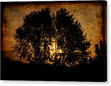 The Sun Behind The Tree Canvas Print by Frederico Borges