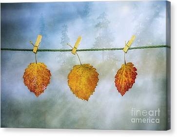 Harmonious Canvas Print - The Sun Shines Again by Veikko Suikkanen